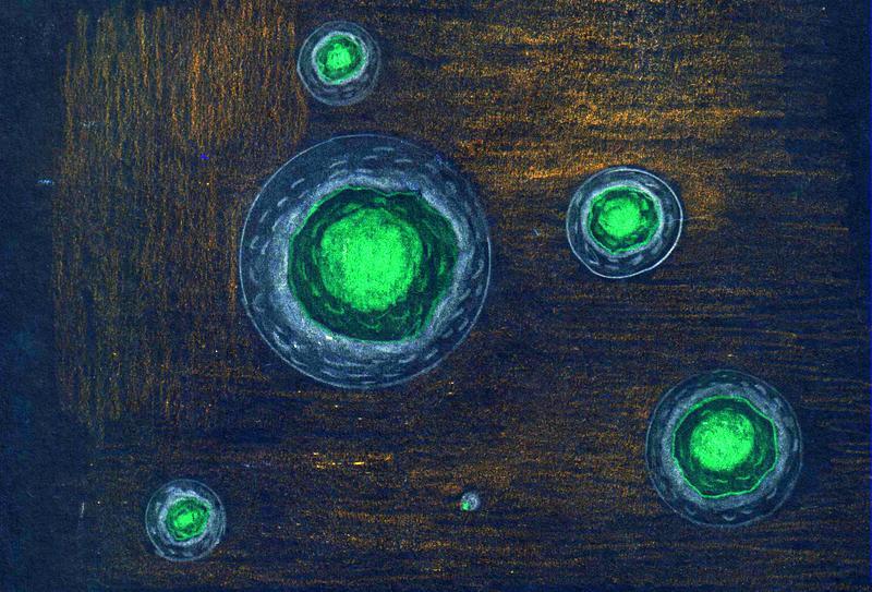 Predavanje o matičnih celicah