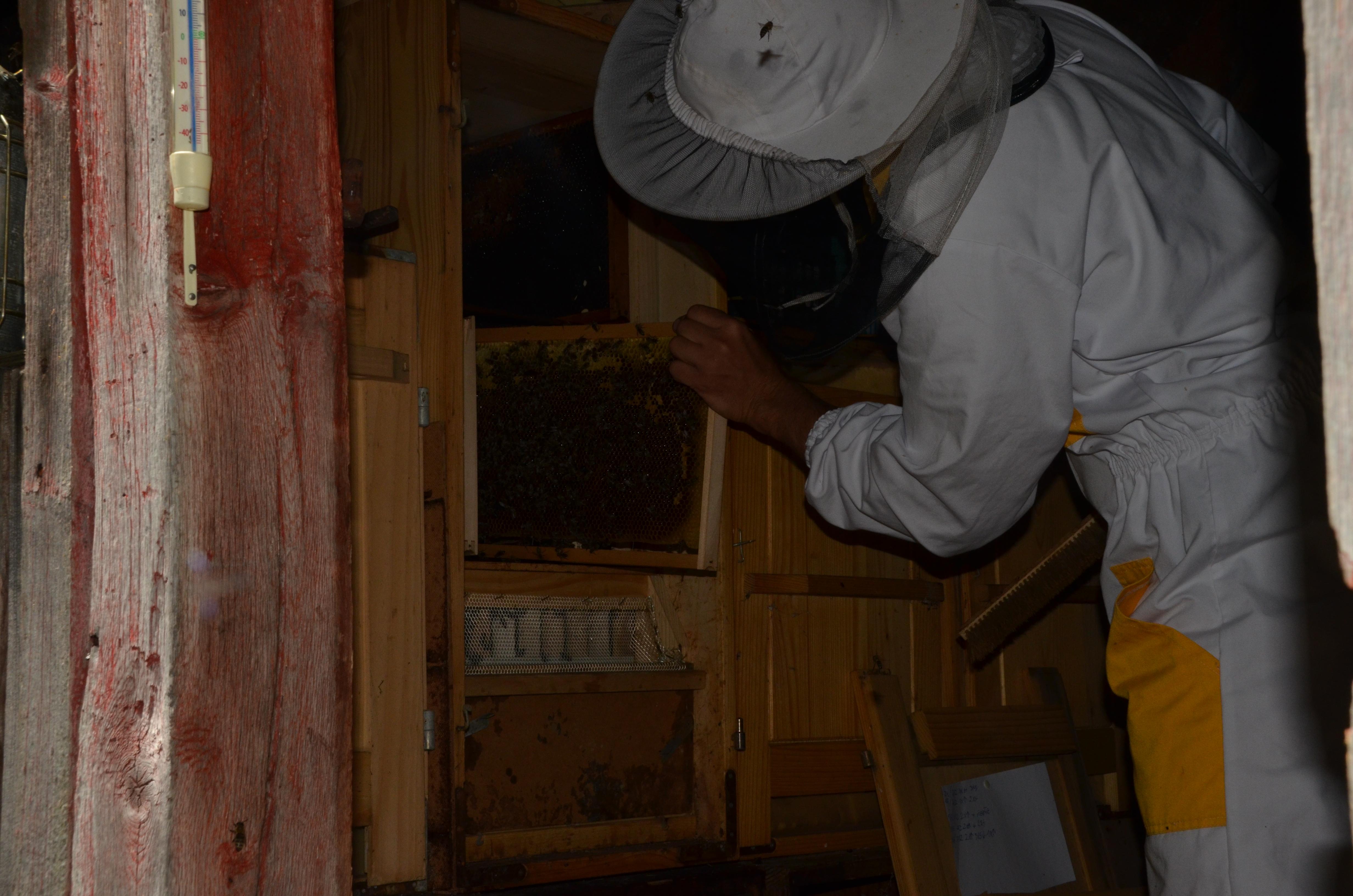 Pogovor o vlogi čebel v življenju slovenskega človeka in degustacijo medenih izdelkov